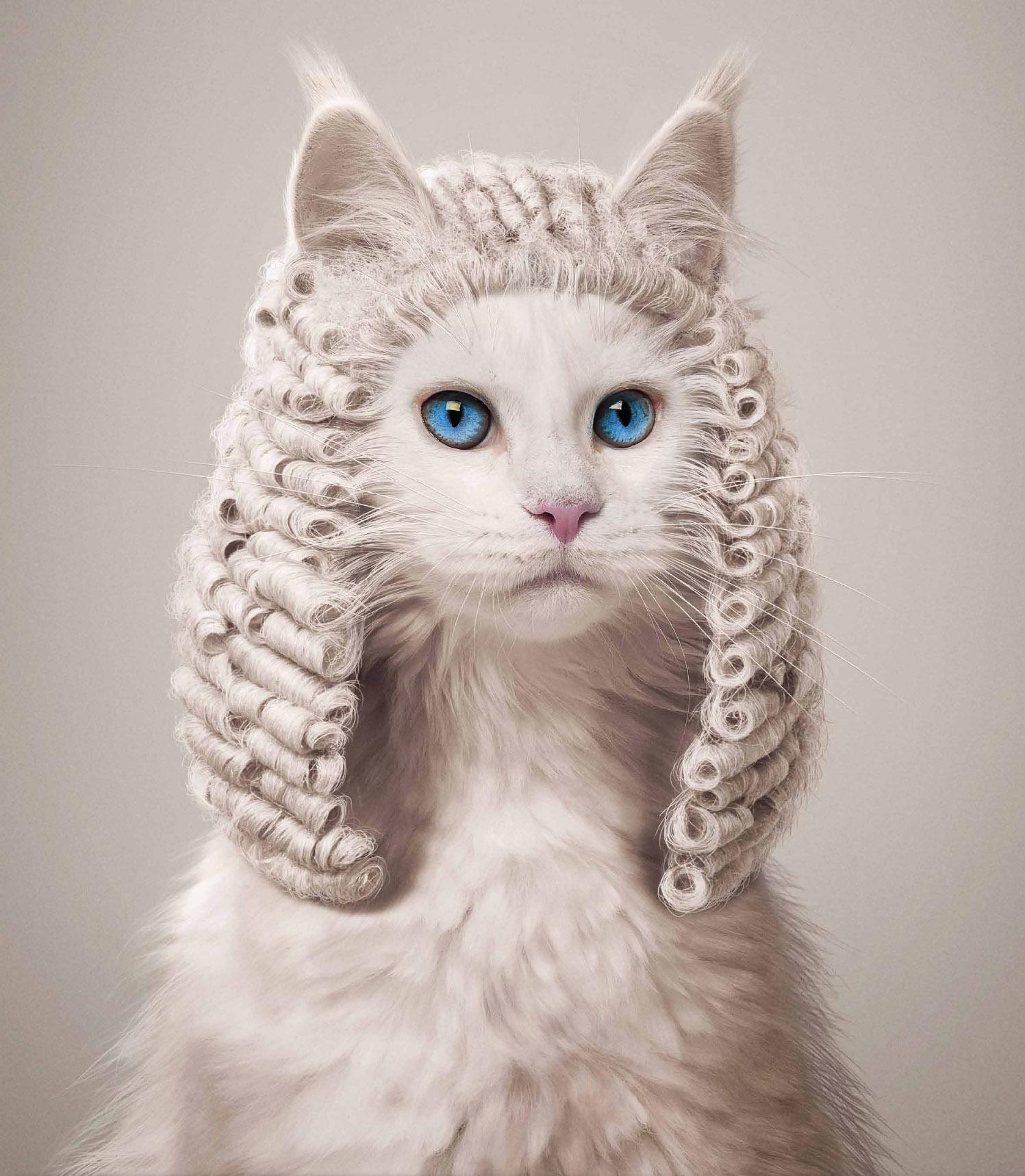 législation élevage chats